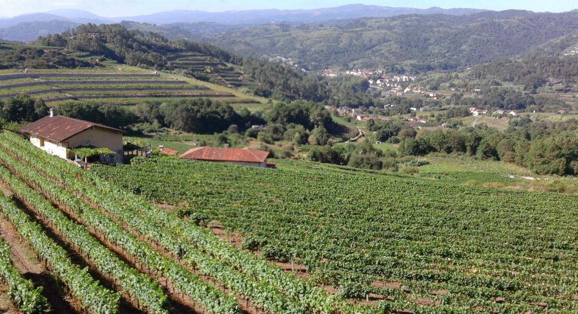 Vista de los viñedos vilerma. Valle ribeiro
