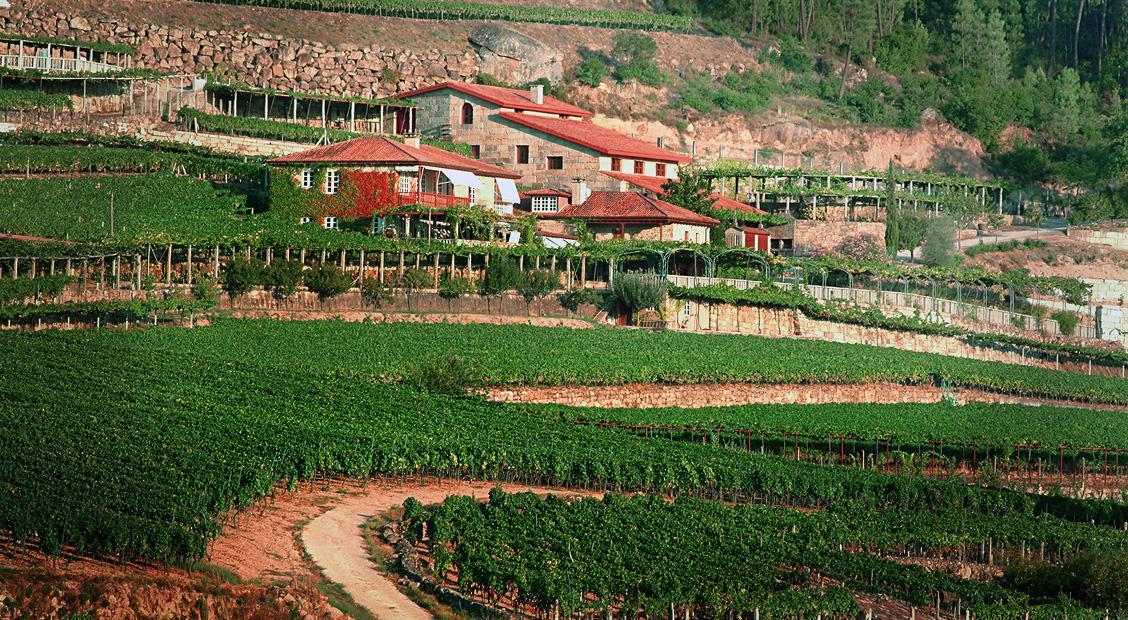 Vista Bodega Vilerma D.O Ribeiro